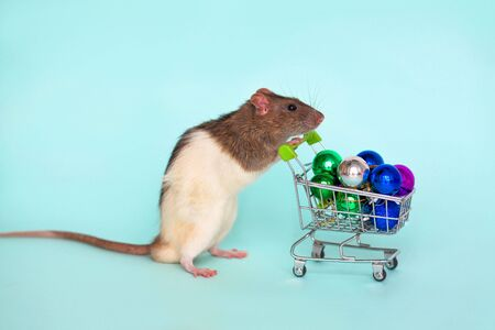 A black white rat rolls a wheelchair with New Year is toys on a blue background. Symbol of 2020 on the Chinese calendar. Copy space