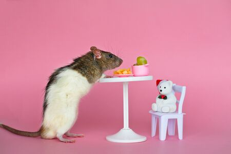 The homemade decorative rat is black white eating cheese and grapes at the table against a pink background. Stok Fotoğraf