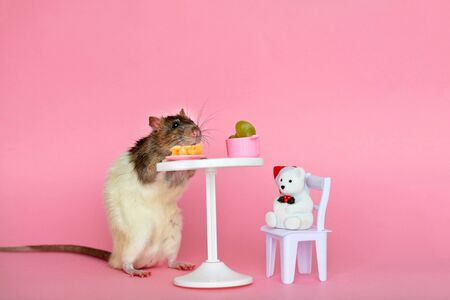 The homemade decorative rat is black white eating cheese and grapes at the table against a pink background. Stock fotó