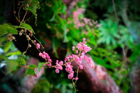nature green: