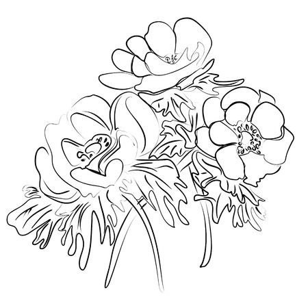 anemones: illustration of an ink sketch of a flower anemones Illustration