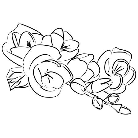 pondering: illustration of an ink sketch freesia flower Illustration