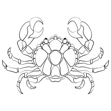 cancer crab: Hand drawn astrological zodiac sign Crab or Cancer. Line art vector illustration of engraved horoscope symbol tattoo ink sketch cancer