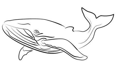 sketchy illustration: Blue whale hand drawn sketchy illustration Illustration