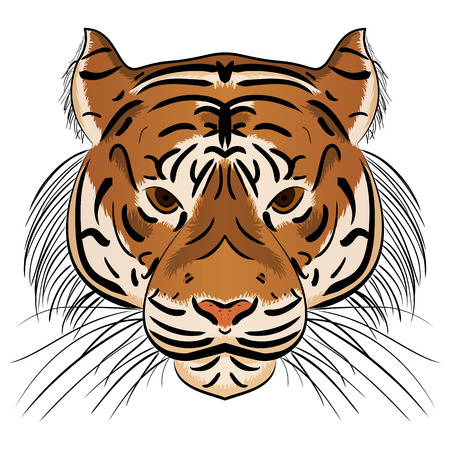 Illustration head ferocious tiger on a white background Illustration