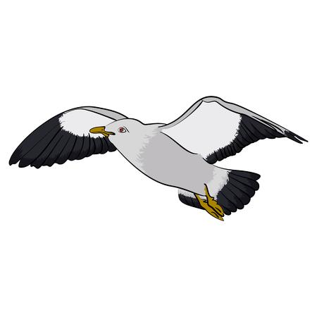 Ilustración de vector de ave de gaviota colorida Ave de mar aislada sobre fondo blanco Foto de archivo - 73670146