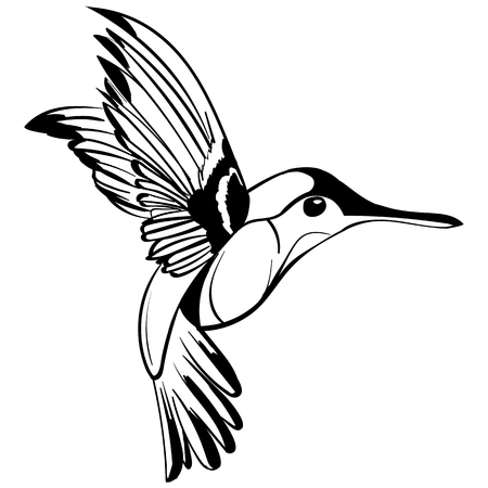 Hand Drawn illustration isolated on white background. Sketch for tattoo. Colibri drawing.