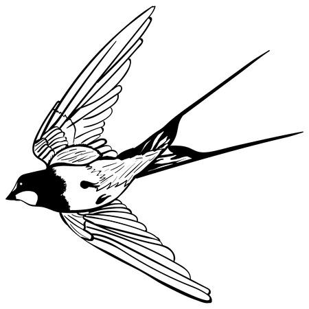 벡터 실루엣 흰색 배경에 비행 제비 스케치 문신 비행 제비 (흑백)