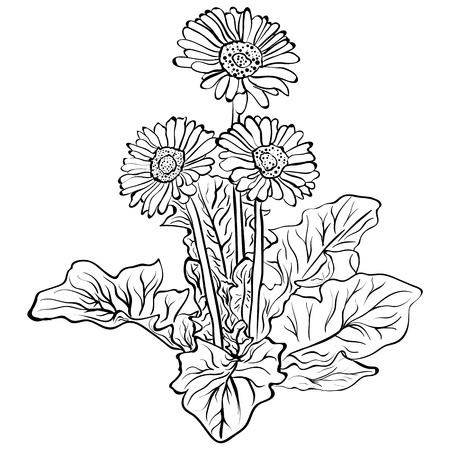 エレガントな装飾的なガーベラの花、デザイン要素。花の枝。ガーベラの花スケッチ  イラスト・ベクター素材