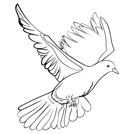 Free flying white dove, sketch style vector illustration isolated on white background hand drawing of white dove, pigeon flapping wings Illustration