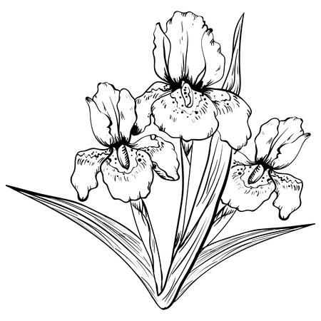 Hand getrokken iris bloem. Schets, vectordieillustratieschets op een witte achtergrond wordt geïsoleerd