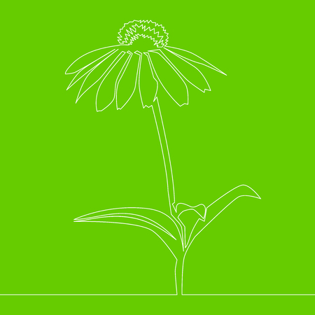 Beautiful flower Continuous line drawing Vector illustration