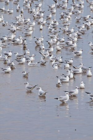 Seagulls on shore of the Sea  photo