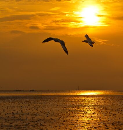 Seagull in flight against the golden sky photo