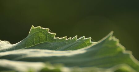 Light and flowing lines of leaves  photo