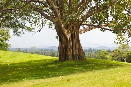 Bäume, die mehrere Jahre in der Wildnis waren Standard-Bild - 14749351