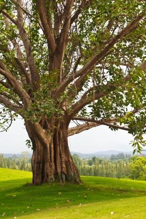 Bäume, die mehrere Jahre in der Wildnis waren Standard-Bild - 14749346