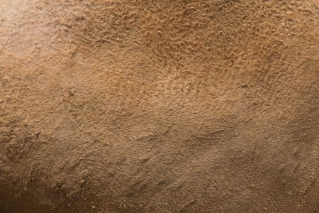 The surface of the camel, brown leather  photo