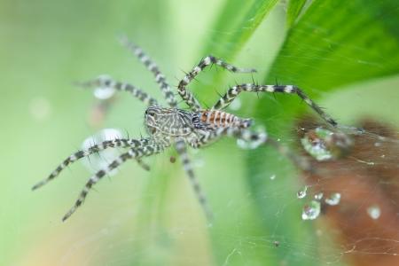 arachnidae: The spider close up in the wild