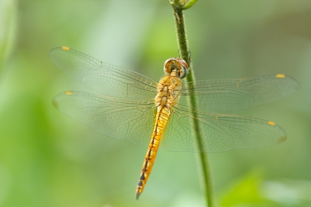 dragonfly wings: Dragonfly wings are beautiful Island branches