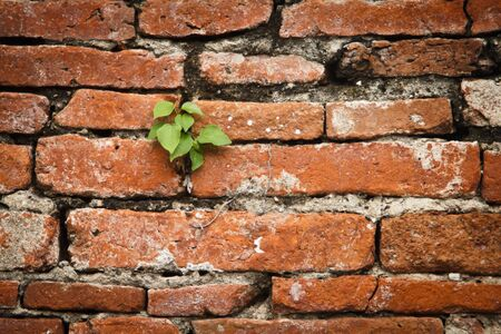 Background consists of a brick and a small tree. photo
