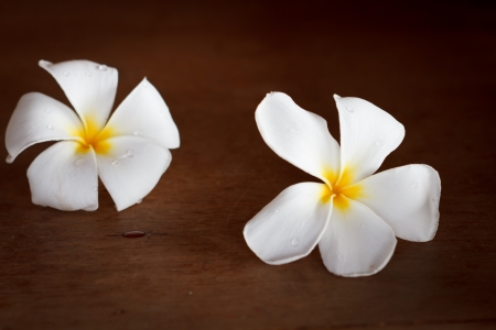 White Frangipani tropical flowers on wood beautiful. photo