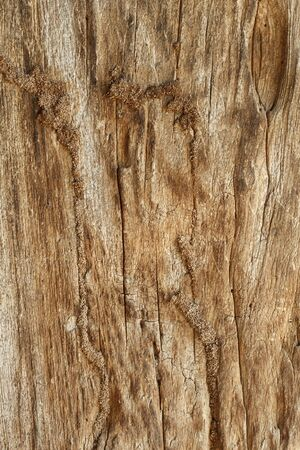 wood grain: Close up of old wooden planks background