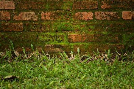 old red brick wall grown with grass and moss photo