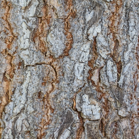 Old Wood Tree Texture Background Pattern Stock Photo - 20298237