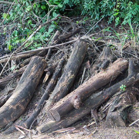 The wood is cut into pieces, leaving them in the wild. photo