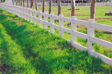 picket: White picket fence in the lawn