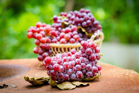 red grape: Red grape fruits in the basket