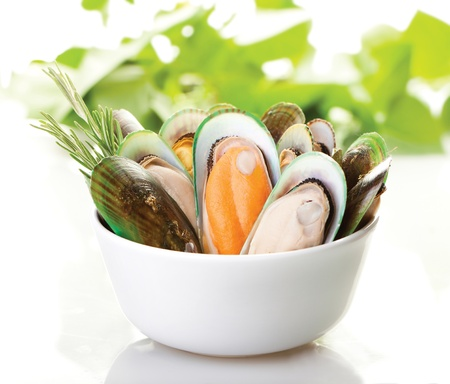 A white plate of New Zealand mussels with a white background Stockfoto