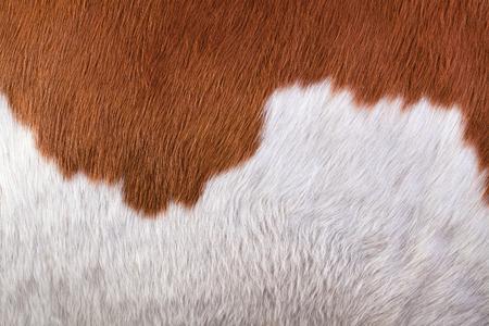cow hide: Hide a cow. Macro Stock Photo
