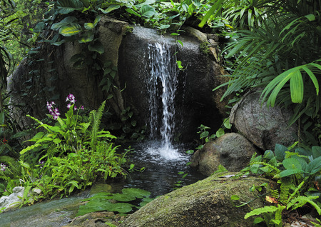 jungla: pequeña cascada de montaña en la selva tropical