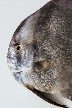 Close-up of black fish on white background