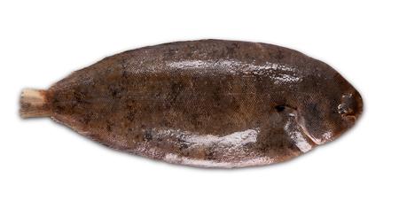 Fresh fish sole on white background