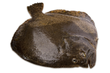 Turbot fish isolated on white background