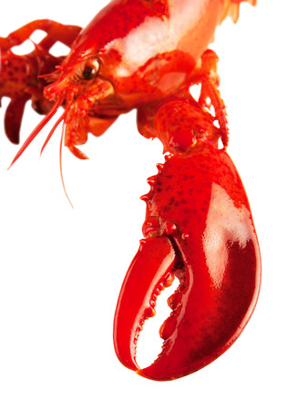 Boiled red lobster isolated on white background