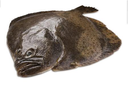 Turbot fish isolated on white background