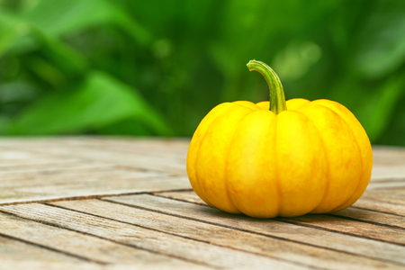 Mini pumpkin on a wooden table in the garden background