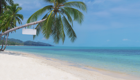 Bent palm tree on the pristine beach of a tropical island
