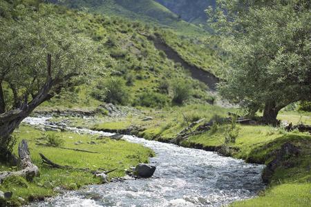 Trees near a mountain stream in a sunny day Standard-Bild
