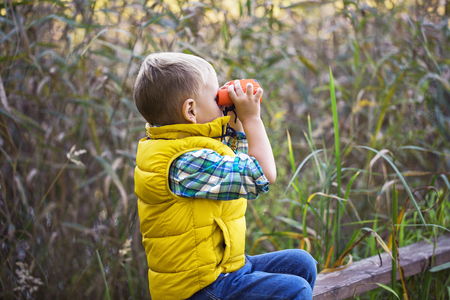 Little boy with binoculars sitting on a wooden fence in the reeds on the lake and exploring the environment warm autumn day