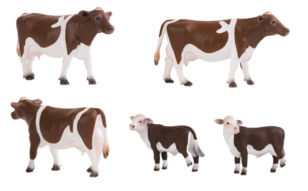 Ð¡ow and calf isolated on white background, various poses 스톡 콘텐츠