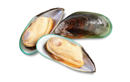 Three raw New Zealand mussels on shell isolated on white background Stockfoto