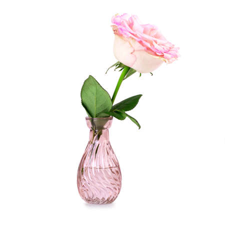 One mini rose in a vase isolated on white background Standard-Bild
