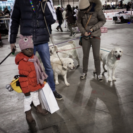 MILAN, ITALY - JANUARY 11: People and dogs take part in the international dogs exhibition of Milan, the most important dog show in Italy, on JANUARY 11, 2014 in Milan.