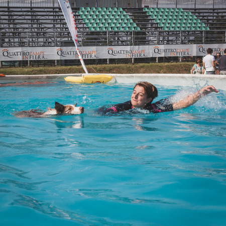 MILAN, ITALY - JUNE 7  Dog and trainer enjoy the swimming pool at Quattrozampeinfiera, event and activities dedicated to dogs, cats and their owner on JUNE 7, 2014 in Milan