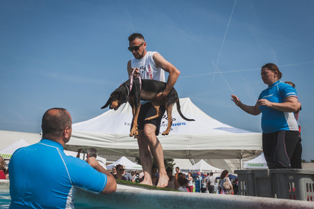 MILAN, ITALY - JUNE 7  Trainers take dog to the swimming pool at Quattrozampeinfiera, event and activities dedicated to dogs, cats and their owner on JUNE 7, 2014 in Milan